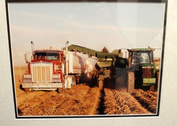 picture of harvesting