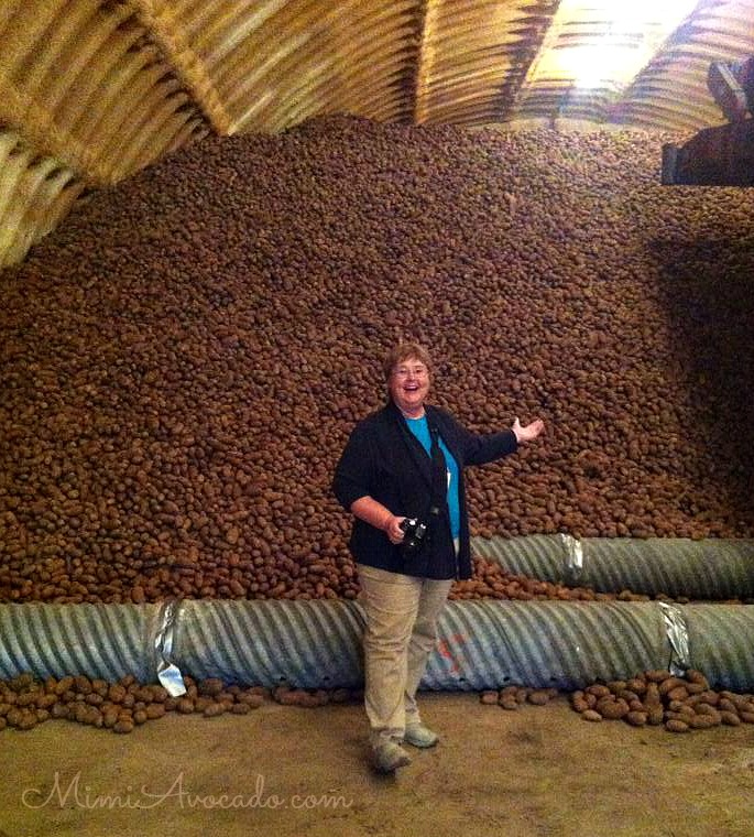 Have you ever seen so many potatoes? Imagine 13 billion pounds of potatoesu2026thatu0027s how many are harvested each year in Idaho on 300000 acres. & Idaho Potato Harvest Tour Part 2: All About Potatoes ? Mimi Avocado