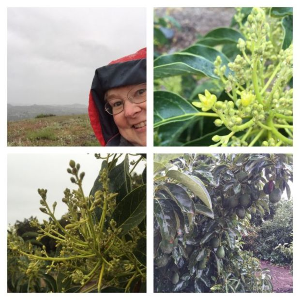 rain-collage-2