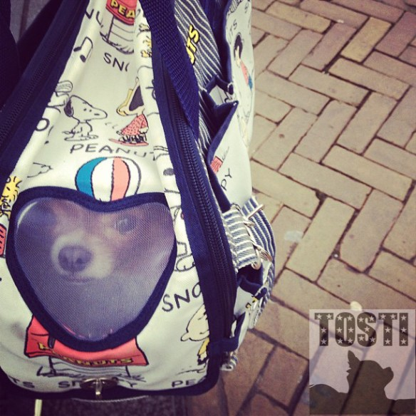 tosti_peek_2