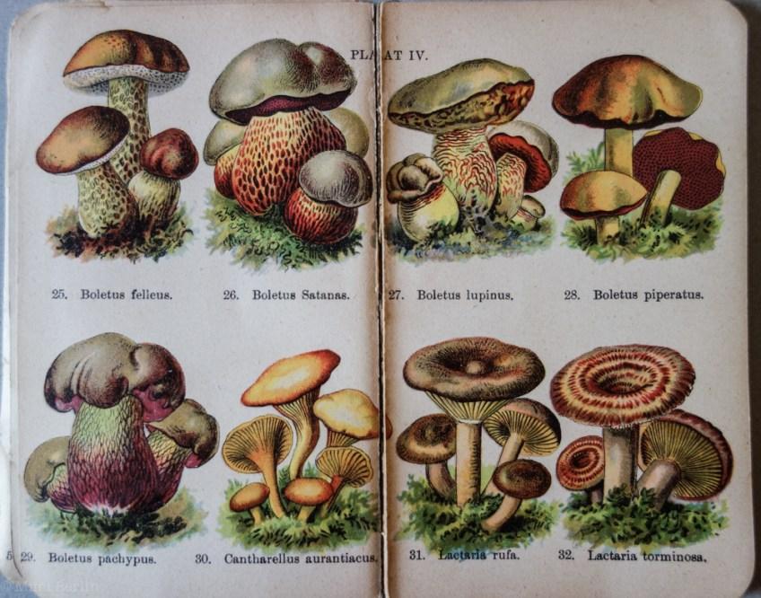 Poisonous Mushrooms
