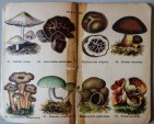mimiberlin_poisenous_mushrooms_vintage_flora-07891