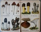 mimiberlin_poisenous_mushrooms_vintage_flora-07892