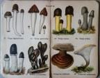 mimiberlin_poisenous_mushrooms_vintage_flora-07892