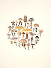 Amy Ross Mushrooms