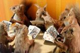 walter potter, squirrel card game