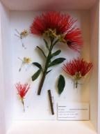 Alberto Barraya, Herbarium of Artificial Plants 12