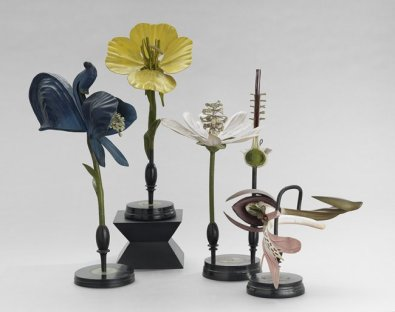 Flower Botanical Models