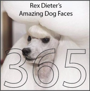 amazing dog faces by rex dieter