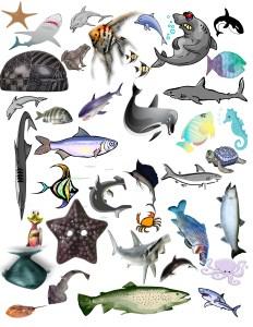 Shark Search