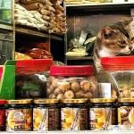 「猫は見つかった。安心しなさい」香港警察との思い出①