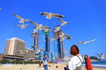 【釜山】海雲台一日遊:海雲台景點&美食這樣玩,餵海鷗看鯊魚、迎月嶺吃魚糕