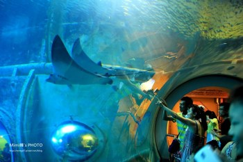 【墾丁景點】海洋生物博物館:便宜門票&夜宿海生館預約,三大展區與超歡樂戲水池