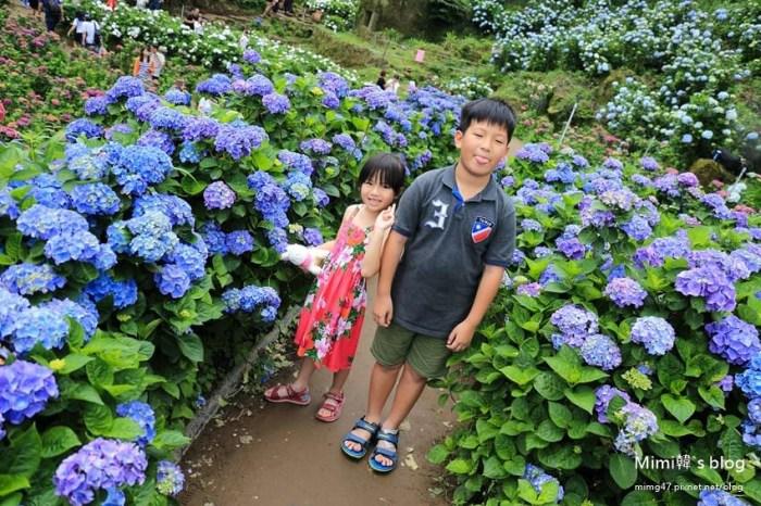 【台北陽明山】高家農園竹子湖繡球花海:花團錦簇滿滿花海絢麗奪目,超漂亮唷~
