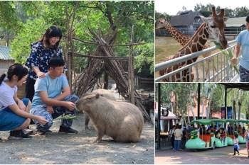 台南 頑皮世界野生動物園攻略:爆萌水豚君&長頸鹿互動零距離,優惠門票交通建議