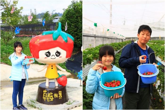 【台中草莓園】草莓世界(2020已開園):台中採草莓親子景點超好玩!免費入園無低消
