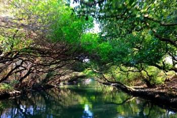 【台南景點】四草綠色隧道(附搭船票價&交通)台江國家公園絕美倒影畫面天使之吻