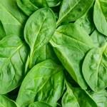葉酸の必要摂取量は通常の2倍!サプリメントを選ぶ2つのポイント