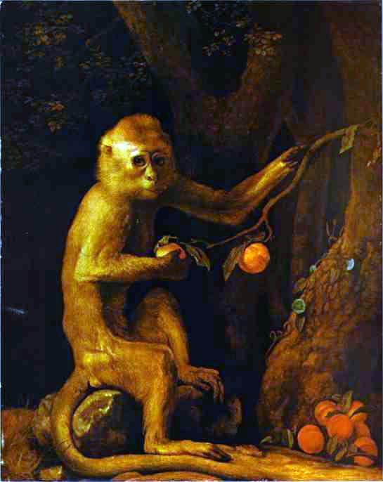 The Plight of the Pet Monkey in 19th century Literature