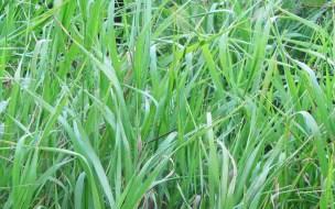 grassblog