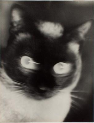 'Katz' - Otto Umbehr 1927