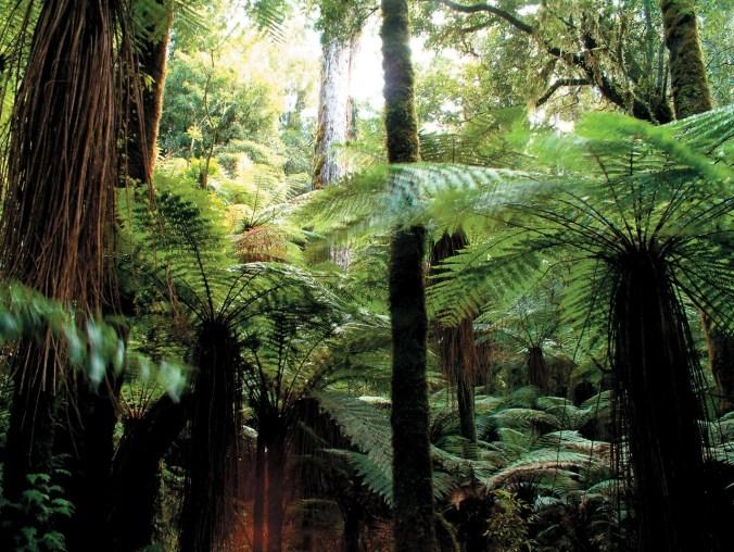 nz-rain-forest
