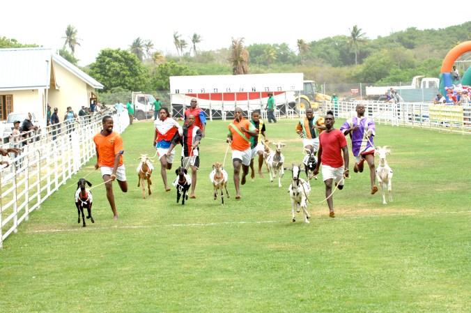 Buccoo Goat Race Festival 2010 171