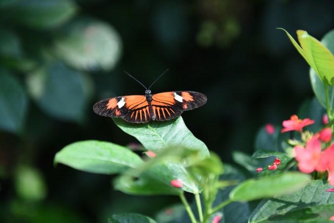 Butterfly Conservatory DSC_0827