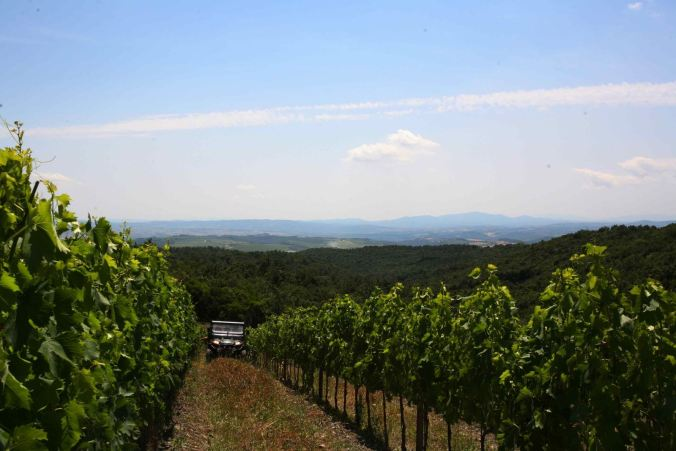 jeep in vineyard