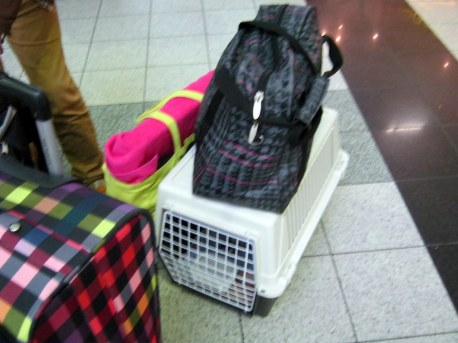 Na letisku v BUD