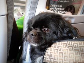Gimlík v lietadle, fotka (c) Brezáčik
