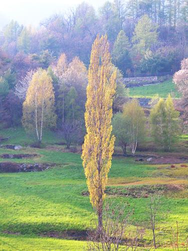 Fiori gialli e qualche brontolio  Mimma Pallavicinis Weblog