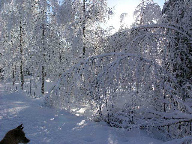 sparspaning-vinter_mellan