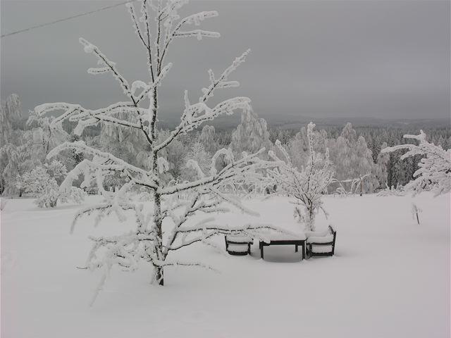 vita-vidder-parontradet_mellan
