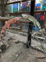 Dos iguanas de la granja