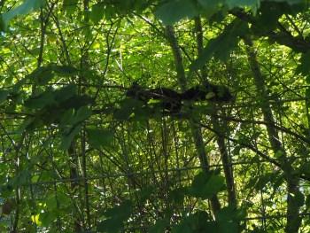Descubriendo una ardilla en su entorno natural