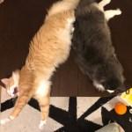 きょうのネコズ だらけたネコズ特集に癒されませんか