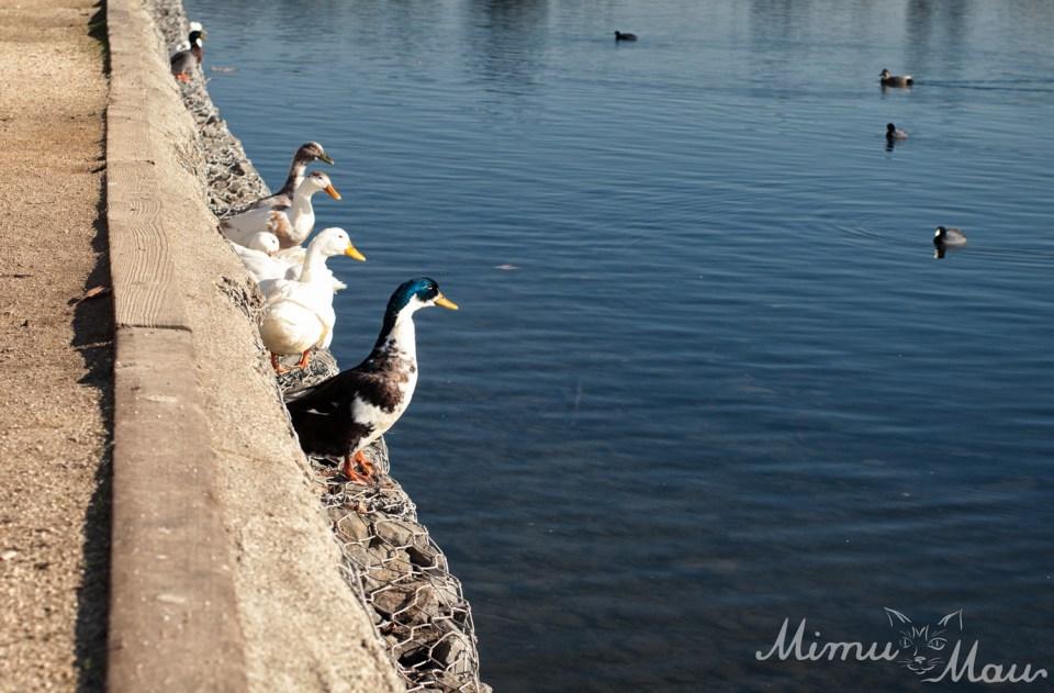 DuckingOut