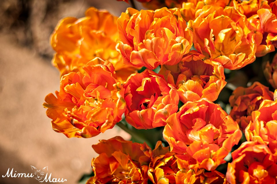 orangetulips