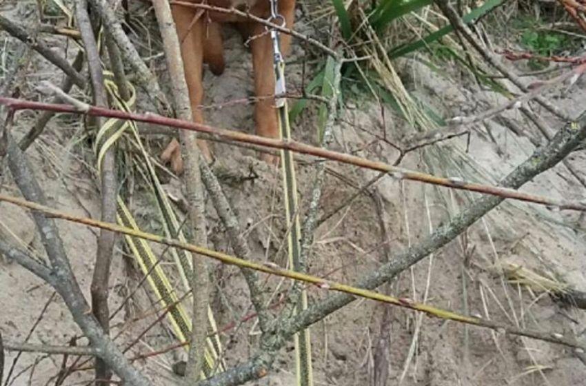 Perrita que fue raptada, la encontraron atada a unos arbustos