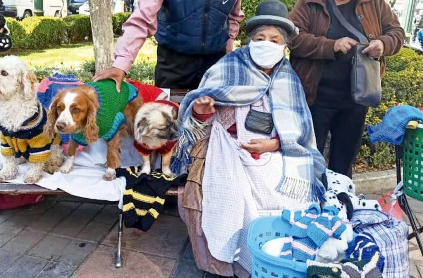 Abuelita confecciona sacos y abrigos para los animales más necesitados