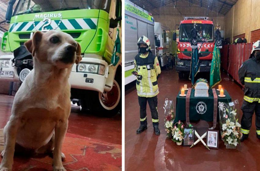 Compañía de bomberos de Chile, dan una merecida despedida a la perrita que les acompaño por más de 12 años
