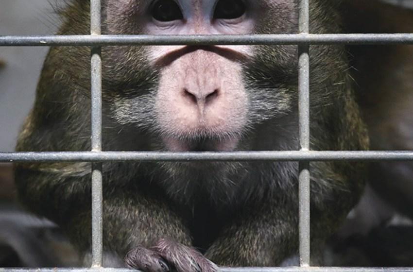Activistas lograron rescatar  animales que eran sometidos a maltratos debido a sus experimentos en un laboratorio de Madrid