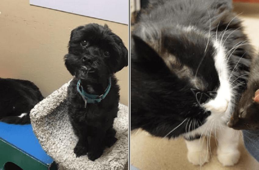 La historia de una amistad nada peculiar entre un perro ,un gato y una rata está sorprendiendo a muchos internautas