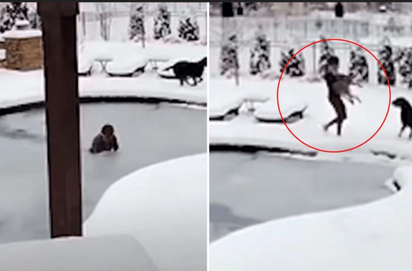 Mujer se lanza a piscina congelada para salvar a su perro que cayó por descuido