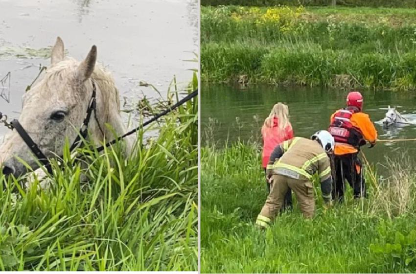 Rescatistas salvaron a unos animales que se habían caído al rio
