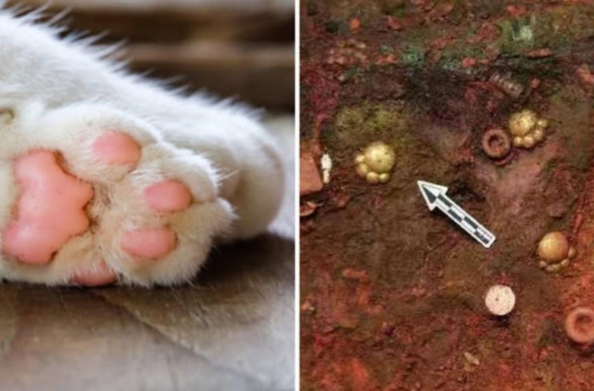 """Hallan """"patas de gato"""" de oro en un cementerio de China"""