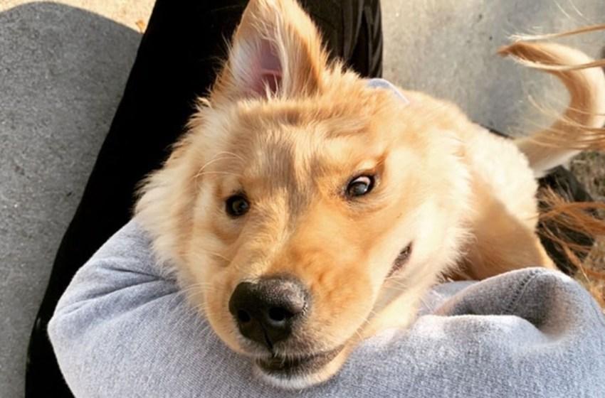 Dulce cachorra tiene una oreja en el centro de su cabeza que parece un 'unicornio dorado'
