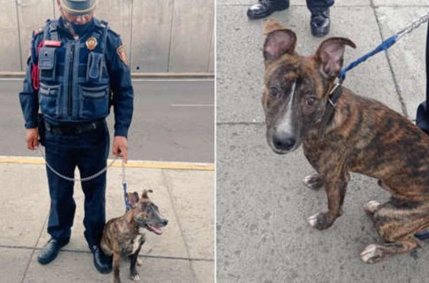 Policía encuentra a un perrito que fue abandonado bajo un poste de luz