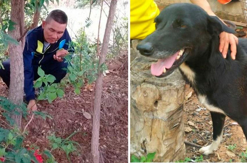 Un bebé recién nacido fue encontrado enterrado, por un perro con discapacidad. Su madre lo había enterrado vivo